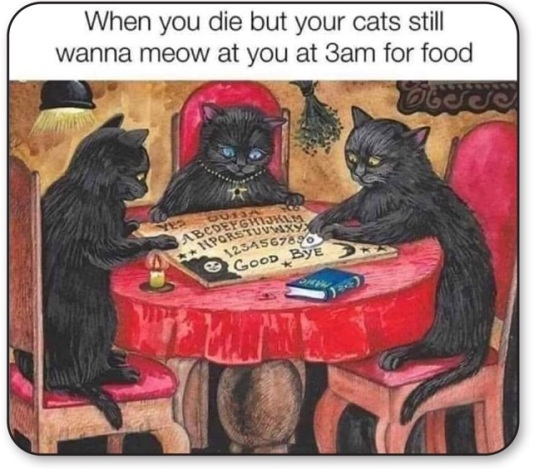 CATS OUIJA